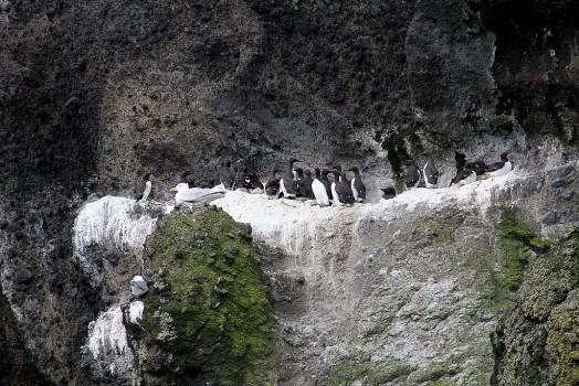 6 Fågelberg Island 2013 PB