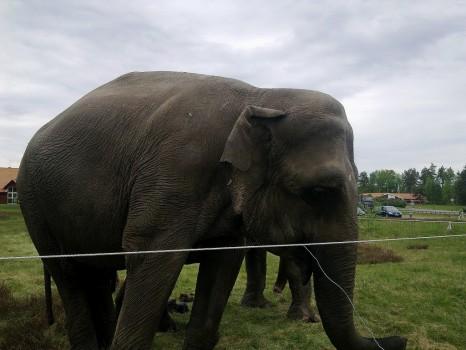 2 Elefant 3 20130527