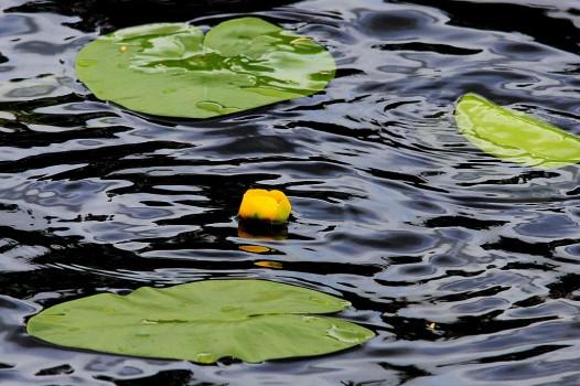 24 IMG_4432 På de mörka tysta vatten