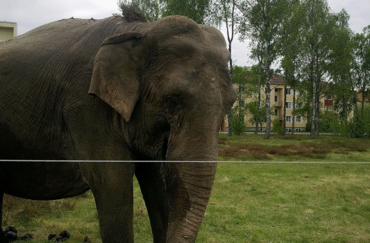 3 Elefant 2 20130527