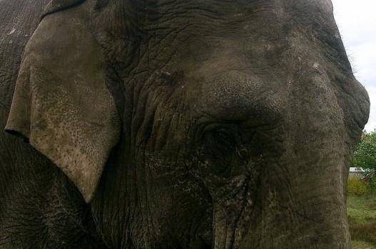 4 Elefant 1 20130527