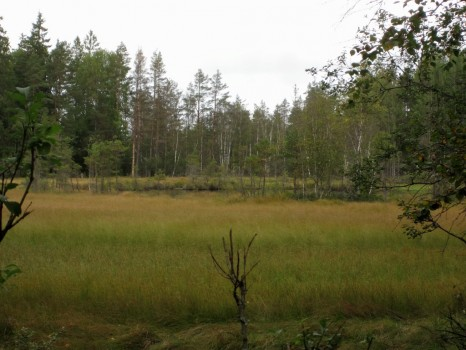 1 IMG_4959 Östersjön, Hässlehultsgölen