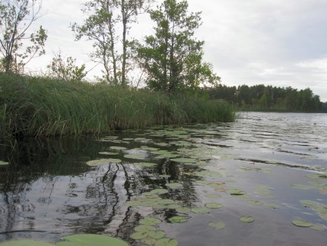 26 IMG_4700 Rakt väster om Delebackarna där fågeltornet står mellan Sandsjön och Tängsjön