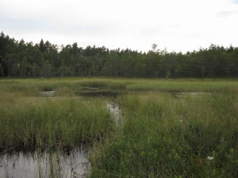 9 IMG_4637 Mellan Sandsjön och Tängsjön från öster mot väster vid fågeltornet