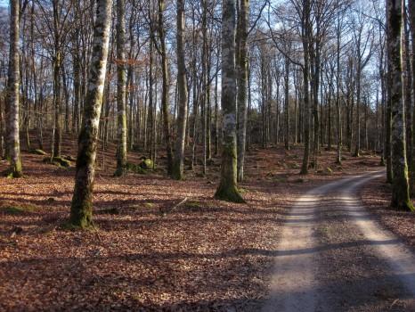 26 IMG_0125 Lundsbo bokskog