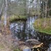Lagan mellan Kvarnen och Södra Parkbron med gott om nedfallna träd i vattnet.