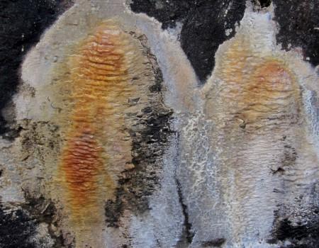 10 IMG_1397  Kalkutfällningar, kalciumkarbonat, på vägg i värnet 500 meter norr om Bockavärnet