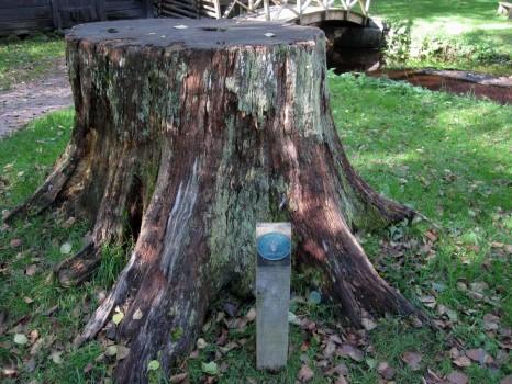 19 IMG_1272 _Evighetsträd Linné 2007_ här stod jag som Carl von Linné 2007