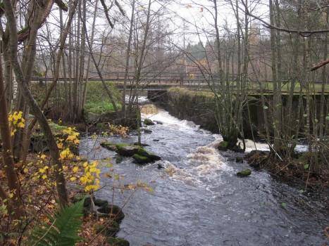 8 IMG_1575 Härydsån gav kraften men också braxfiskevatten