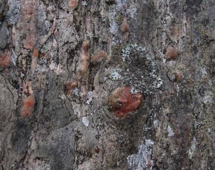7 IMG_1763 Pegmatitogon, centimeter- till decimeterstora kristaller av kvarts, roda av kalifaltspat