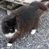 150810-katten-selma-lasarbild