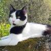 katt-basse-forsvunnen-150821-privat