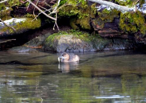 6 Fåglar Liljeholm parken 036
