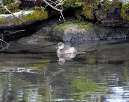 7 Fåglar Liljeholm parken 041