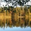 102. Oktober vid Bohultasjön. Foto: Ingemar Gustavsson. 150807