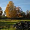 109. Kushult 11 oktober 2013. Foto: Agne Rybeck. 150808