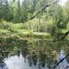 145. Rehnsgölen Södra Park. En relativt okänd pärla i Vaggeryd. Foto: Lennart Karlsson. 150812