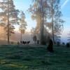 175. Eckersholm i oktober 2014. Foto: Carina Carlin. 150815