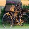 200. Cykel i Norrskog juni. Foto: Leif Palm. 150817