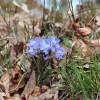 25. Svänö på Store Mosse nationalpark den 19 april i år. Foto: Marja Moberg 150628