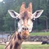 giraff20150717