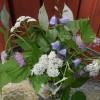 238. Blommor. Juni. Foto: Maj Björk. 150820